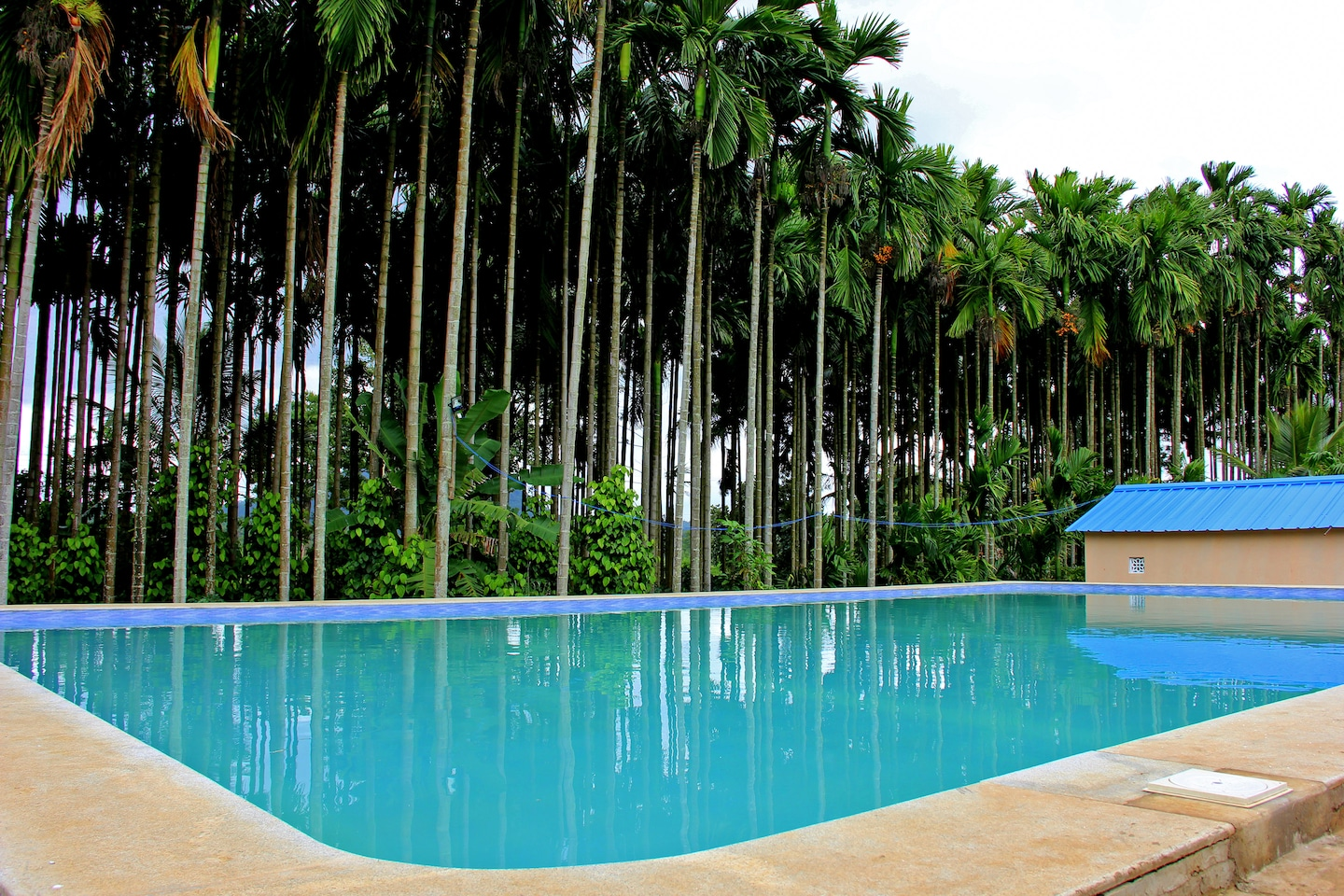 Oyo 6364 resort kushalnagar budget coorg book 7648 oyo Hotels in coorg with swimming pool