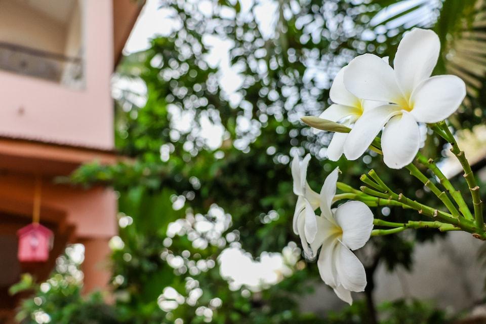 6236 Charming Studio Kingfisher Villa